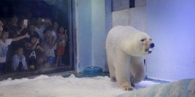 """Proponen un nuevo hogar para el oso polar """"más triste del mundo"""""""