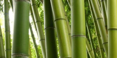 Se realiza la primera Feria nacional del bambú en el Zoológico La Aurora