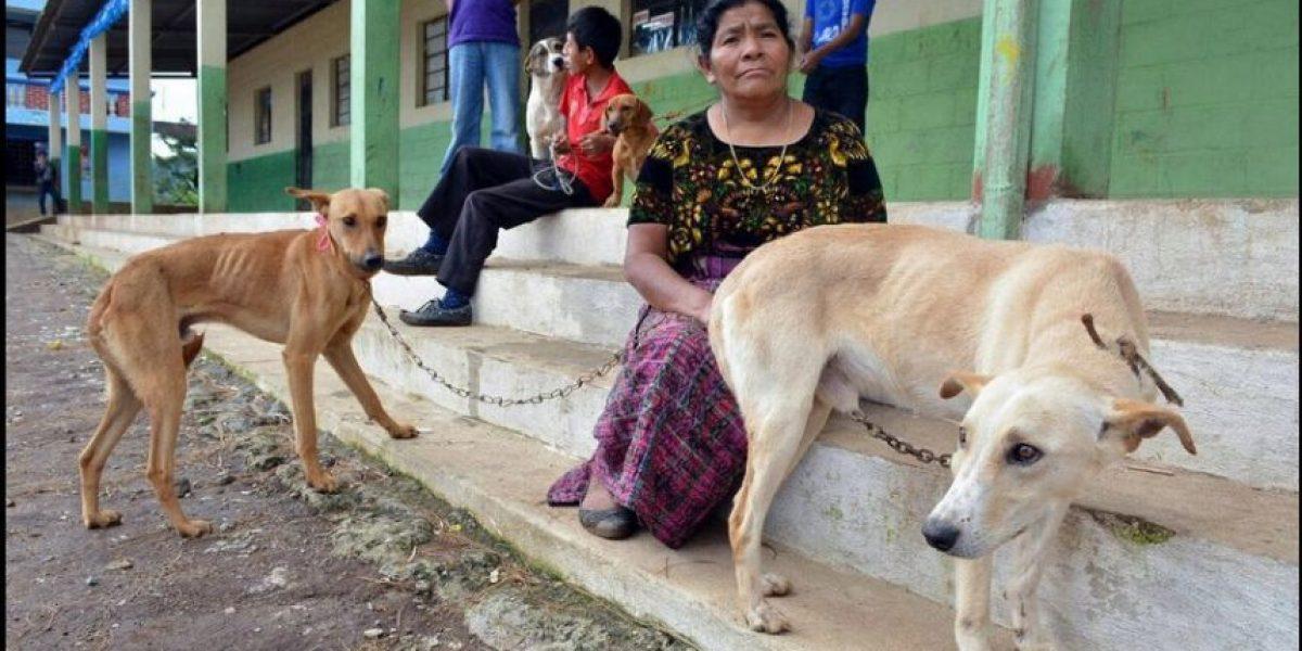 Planean vacunar contra la rabia a 1.5 millones de perros y gatos en todo el país