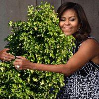 Reddit / Imgur Foto:En inglés, Bush significa arbusto