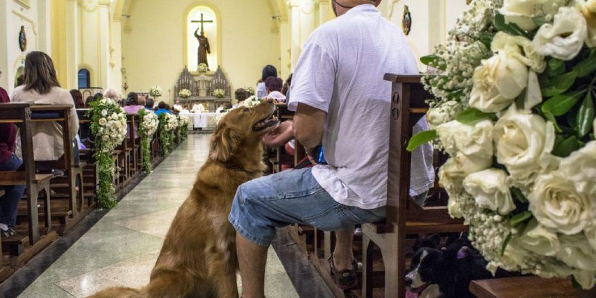 Bendición de mascotas y otras actividades en homenaje a San Francisco de Asís