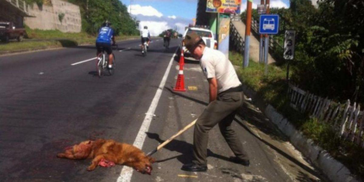 Provial pide respetar a los animales en las carreteras