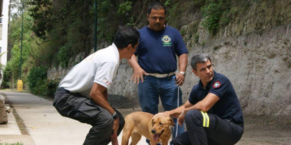 Guatemala es sede de un curso internacional de rescate para humanos y perros