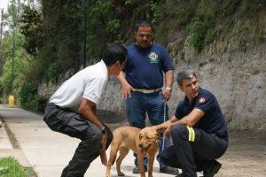 Proceso de selección de los perros. Foto:Bomberos Municipales Departamentales