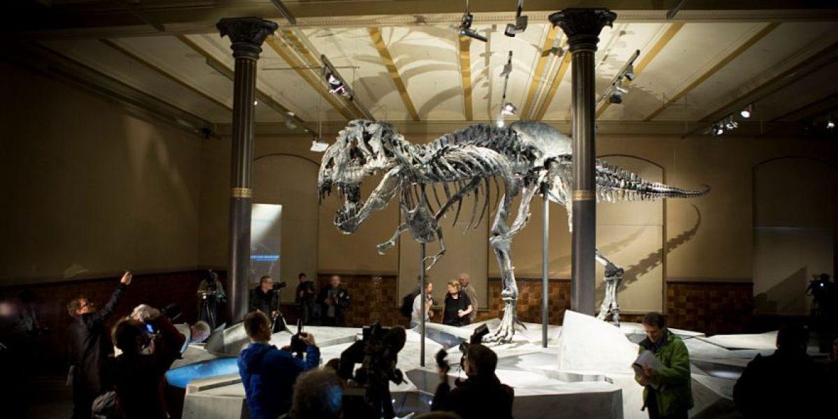 Tiranosaurios usaban poco sus pequeños brazos, según estudio