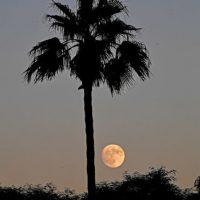 AFP Foto:Indio, California, Estados Unidos.