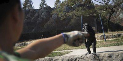 AP Foto:Es la principal atracción del zoológico Central
