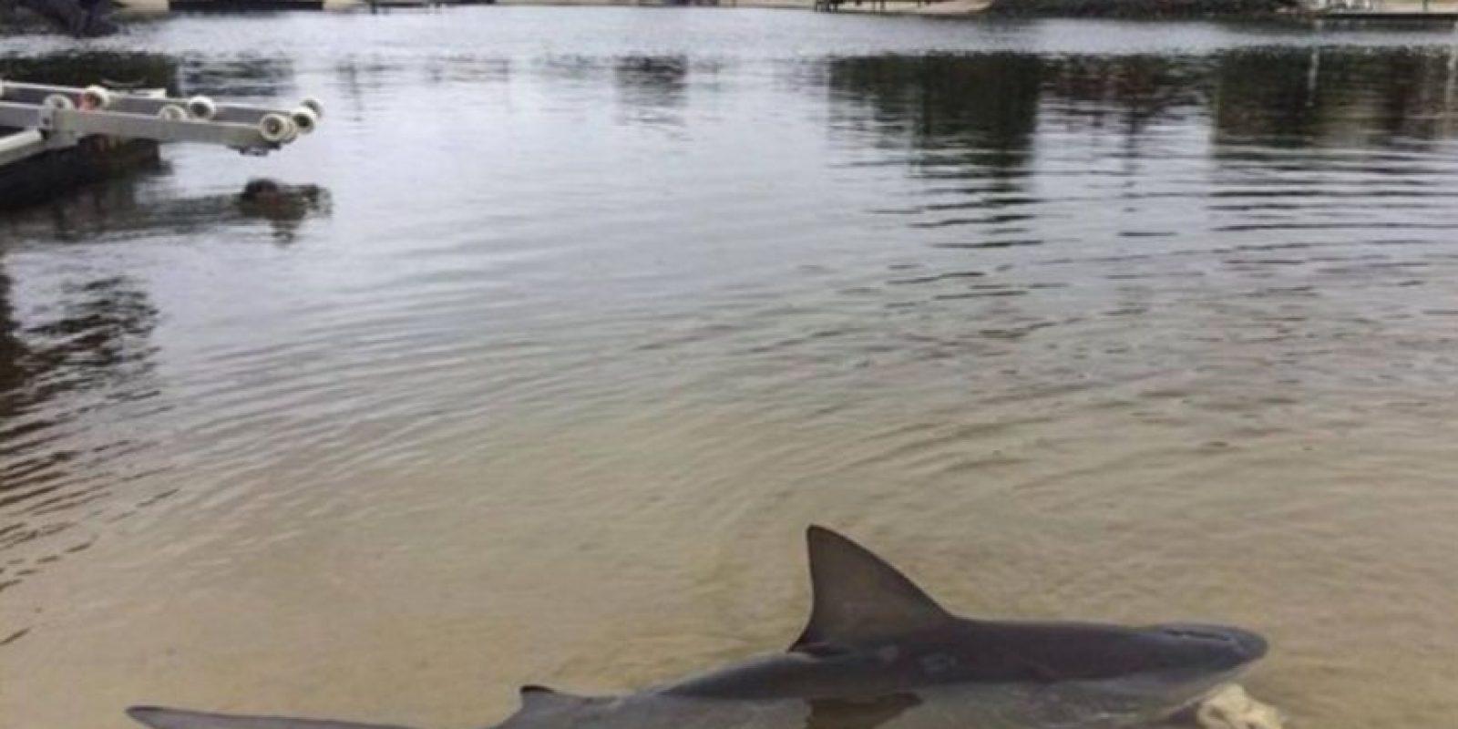Facebok Foto:Porque uno puede hallar tiburones como si nada.