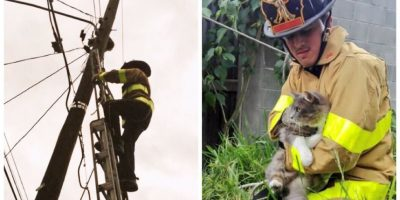 Bombero voluntario rescata a un gato de un poste de alumbrado
