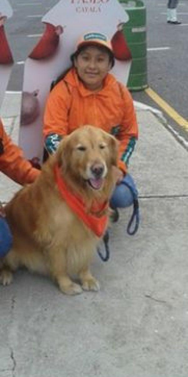 Decenas de perritos participaron en el #DíaPerruno Foto:Publinews