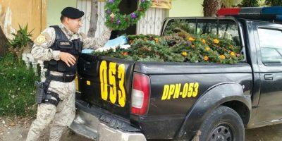 Realizan la primera incautación de ramillas de pinabete en Totonicapán