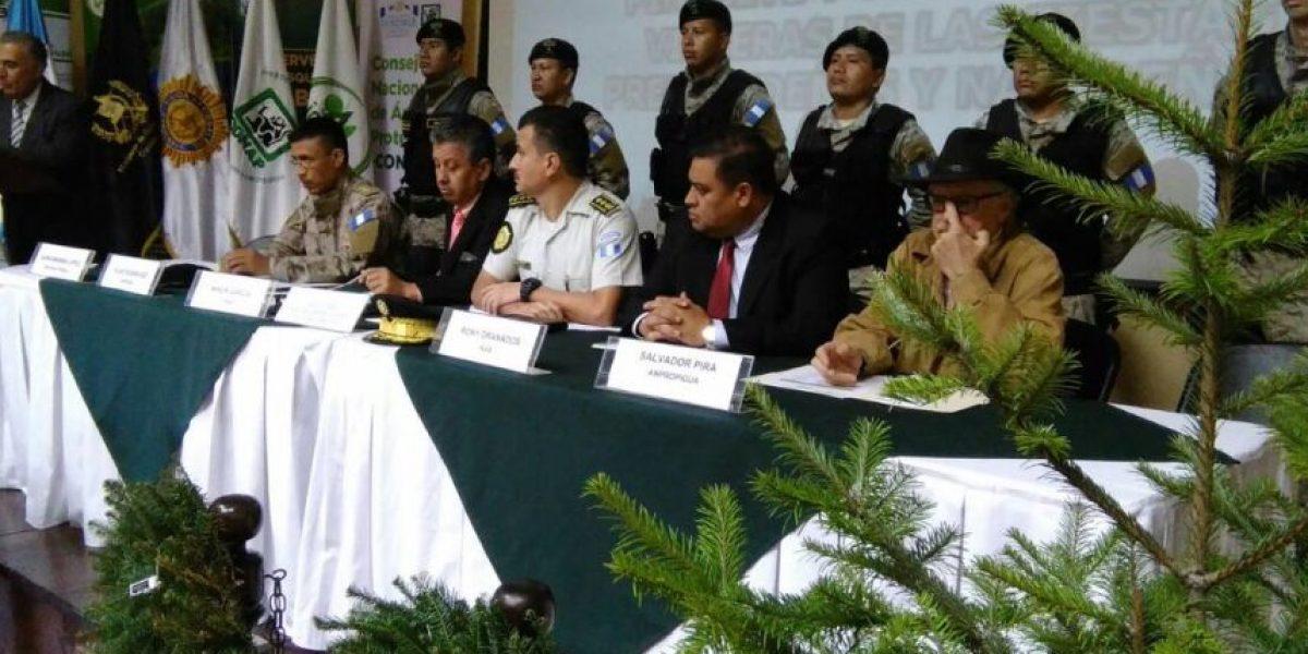 Arranca la campaña de control por la venta ilícita de pinabete