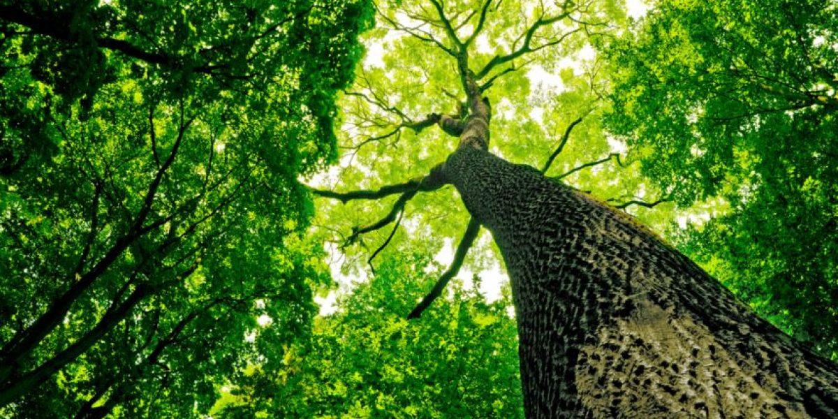 ¿Por qué vivir cerca de un árbol mejora la salud?