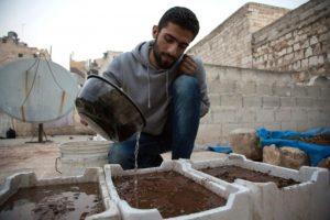 El sirio Amir Sendeh riega sus plantas en su azotea en el asesiado barrio de Alepo de Al Kalasé el 31 de octubre de 2016 Foto:Karam Al Masri/afp.com
