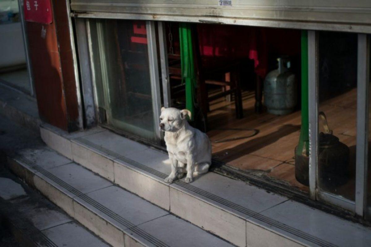 Un perro, sentado en la entrada de un restaurante cerrado en el barrio de Bayi, en Lhasa, capital de la región autónoma china de Tíbet, el 10 de septiembre de 2016 Foto:Johannes Eisele/afp.com