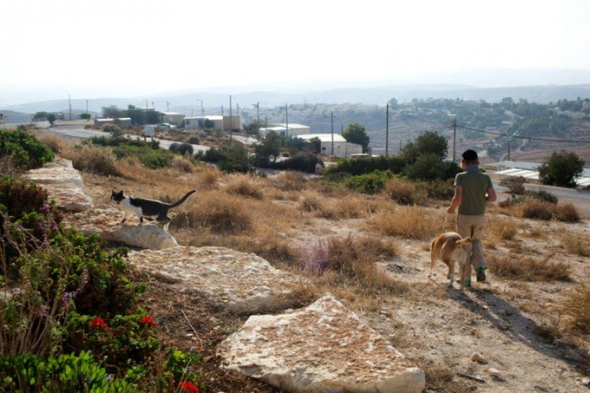 Un niño camina por unos terrenos privados palestinos donde se construyó una colonia judía, en la parte ocupada de Cisjordania, el 14 de noviembre de 2016 Foto:Menahem Kahana/afp.com
