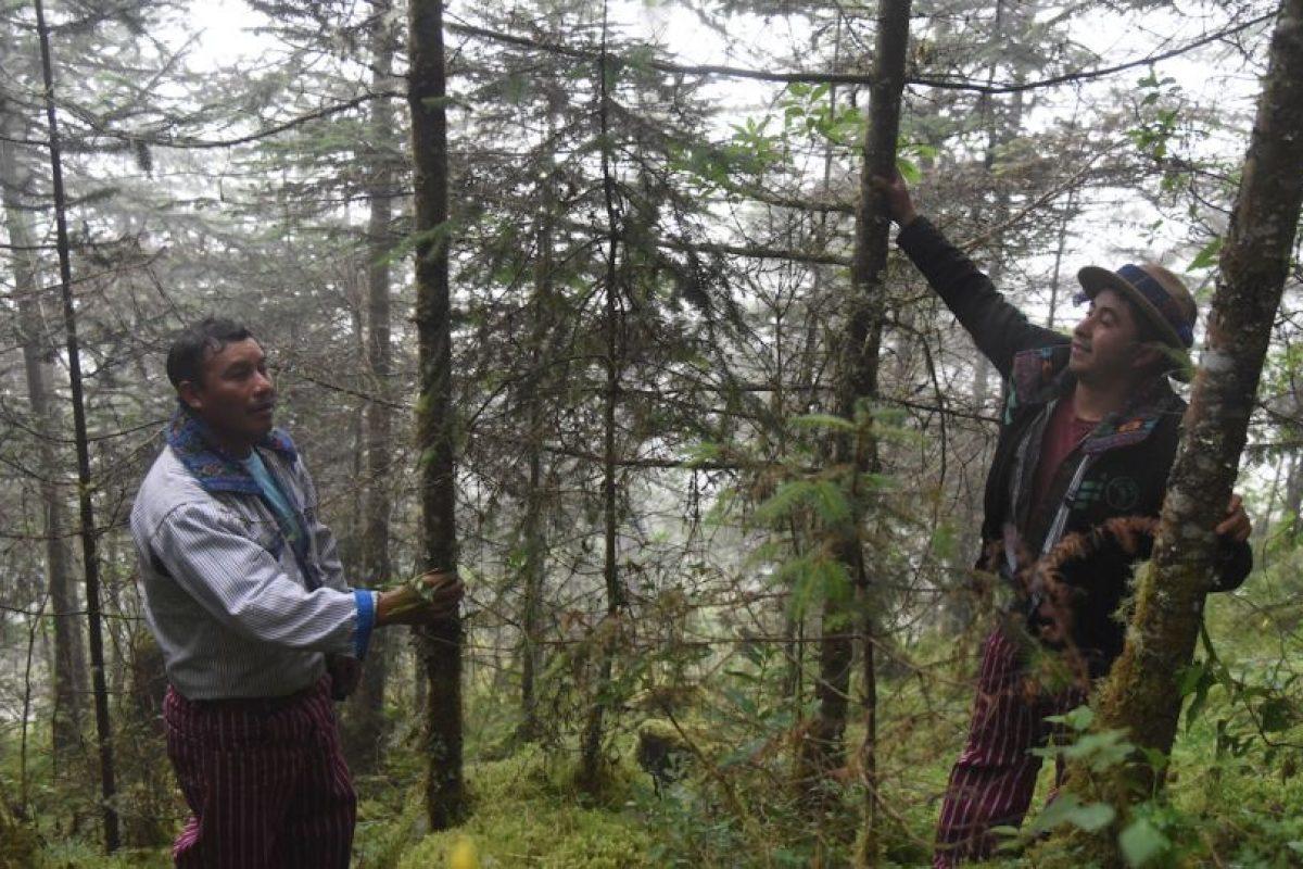 Bosque de más de 200 años en Todos Santos Cuchumatan Foto:Wendy Morataya