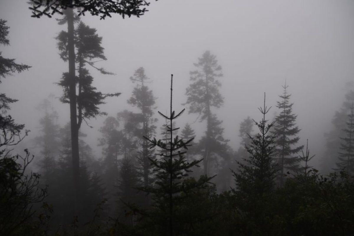 Bosque de más de 200 años en Todos Santos Cuchumatan. Foto:Wendy Morataya