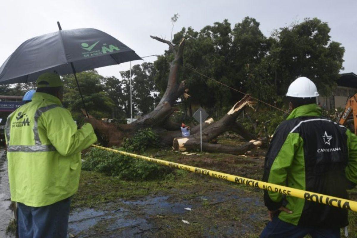 Trabajadores cortan un árbol caído que provocó la muerte de un niño durante el paso de la tormenta Otto en Ciudad de Panamá, el 22 de noviembre de 2016 Foto:Rodrigo ARANGUA/afp.com