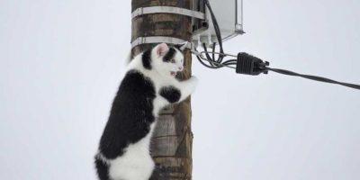 Gato es rescatado tras nueve días en poste de electricidad