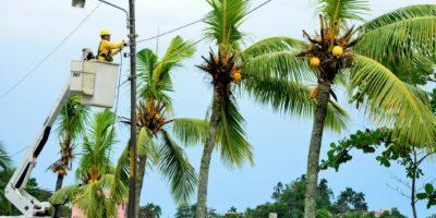 Un trabajador arregla el tendido eléctrico dañado tras los fuertes vientos provocados por el huracán Otto a su paso por Limón, a 160 km de San José (Nicaragua), el 24 de noviembre de 2016 Foto:Ezequiel Becerra/afp.com