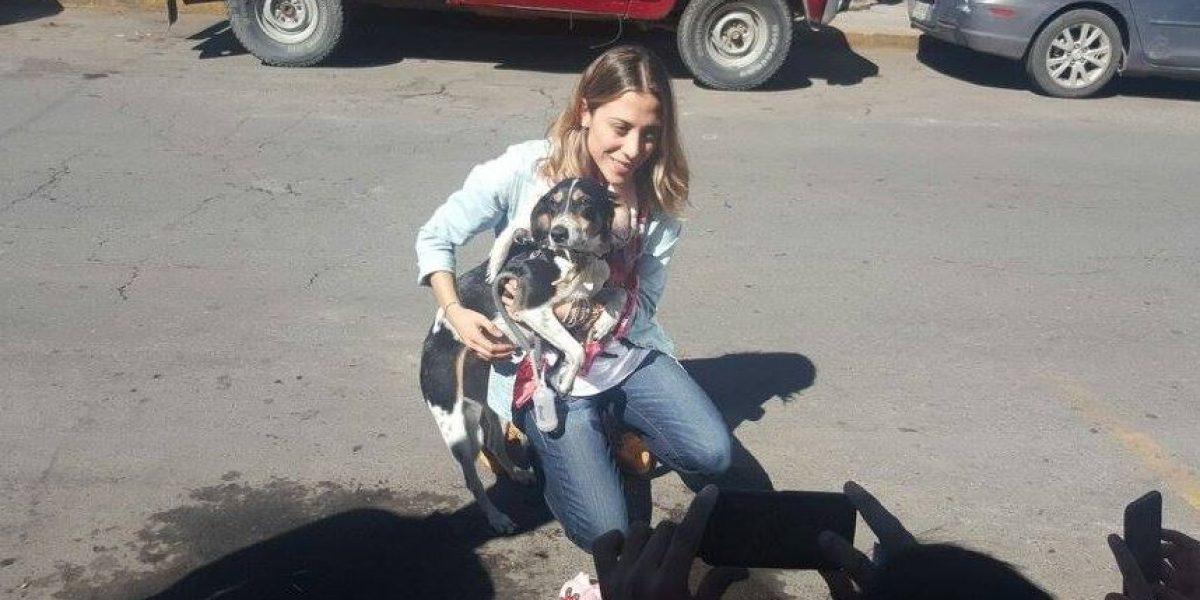 Aparece Mika, la perrita extraviada por aerolínea mexicana