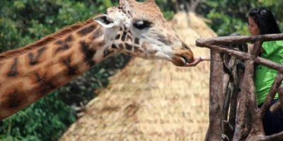 Foto:Facebook Zoológico La Aurora