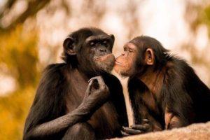 Foto:Facebook Zoo La Aurora