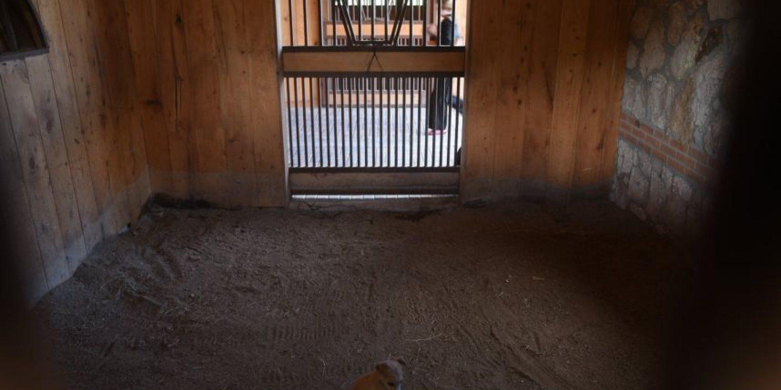 """""""Otto"""" el perro de la finca. Foto:Edwin Bercián"""