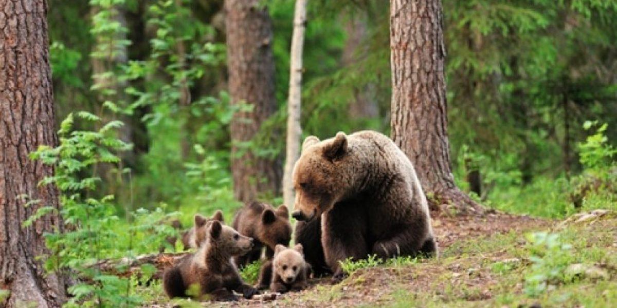 Más de 600 osos han sido asesinados en New Jersey