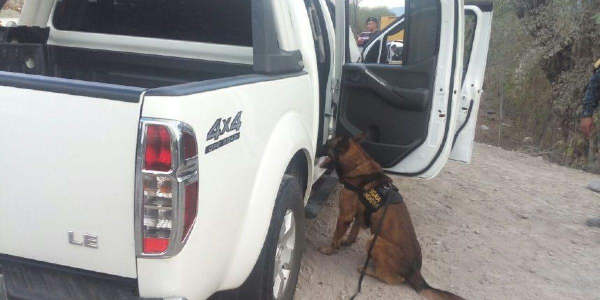 La alerta del perro Jack II permitió incautar más de medio millón de dólares en El Progreso