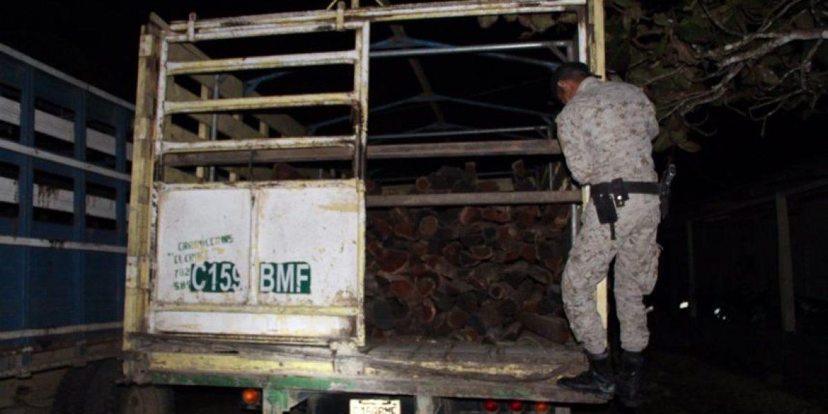 Los capturan por transportar madera de especie protegida