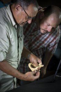 Medían un metro y medio, pesaban cerca de 45 kilos y aún no habían desarrollado un cerebro grande Foto:AFP