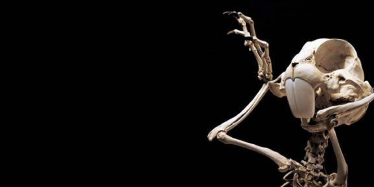 Esqueletos animados de ayer y hoy