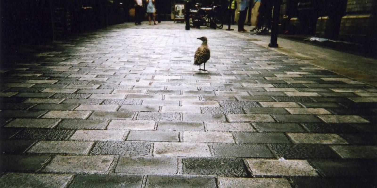 """""""Un ave en West End"""", forma parte del mes de octubre. Foto:Cafe Art – Zin Vaiteikuna"""