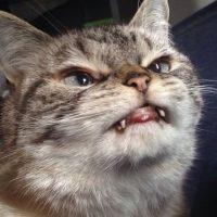 """Loki Kitten es un """"demoniaco"""" gato que conquista Internet. Foto:Vía Instagram/@loki_kitteh"""