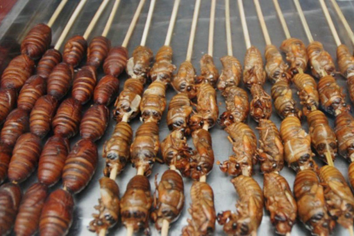 Los huevos y las larvas también se pueden comer. Foto:vía boulderdowntown.com