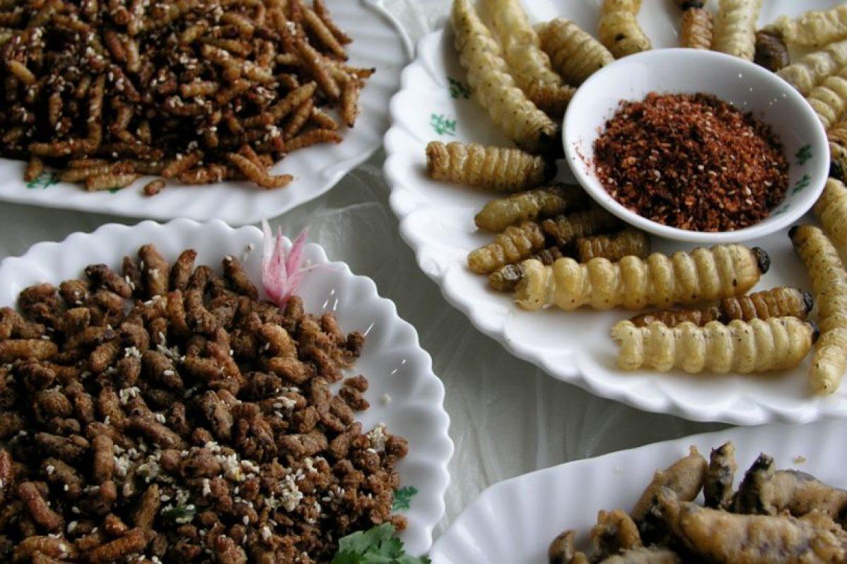 Existen alrededor de 1.462 especies de insectos comestibles registradas. Foto:vía Tumblr