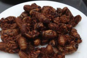Se estima que los insectos forman parte de la dieta tradicional de al menos 2.000 millones de personas en el mundo, según el informe de la FAO. Foto:vía Youtube