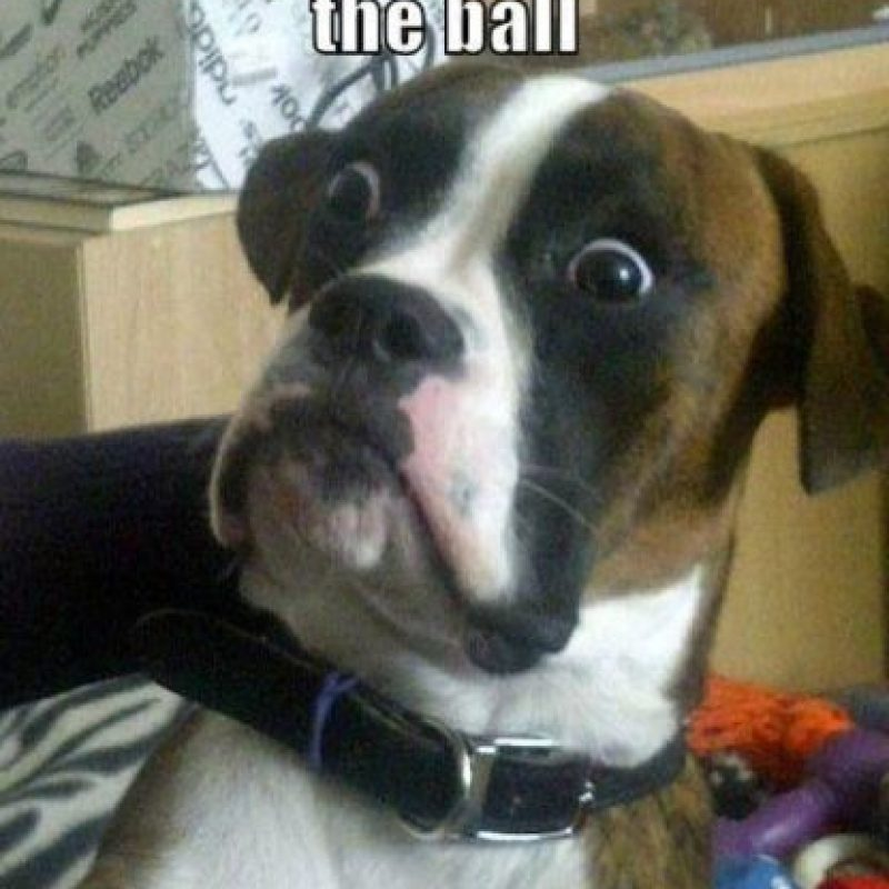 ¿Que vaya por esa pelota y te la traiga de vuelta? Foto:Tumblr