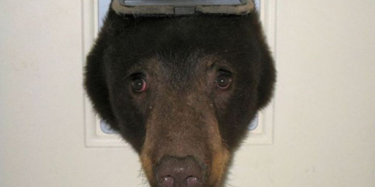 Al estilo Winnie Pooh: Foto de oso atrapado en una casa se volvió viral