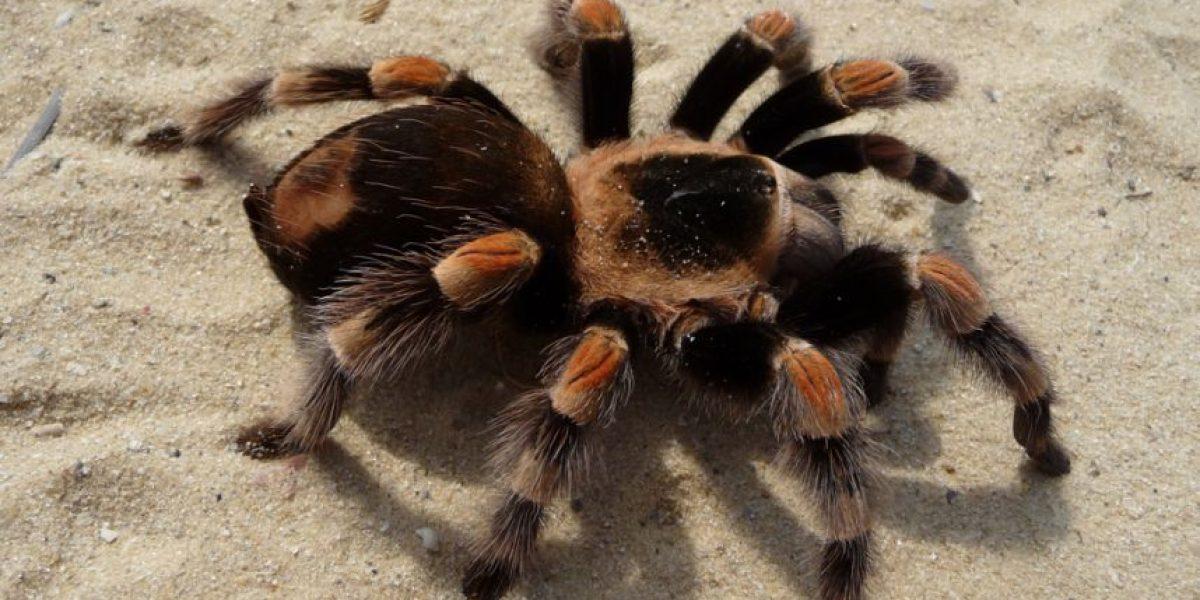 Video: Si odian las arañas no vean esta espeluznante grabación