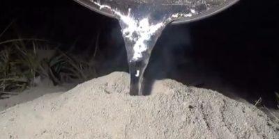 Video. ¿Un hormiguero puede ser una obra de arte?