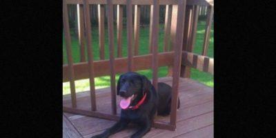 """Aunque también existen fotos de mascotas domésticas """"sufriendo"""" atrapadas en algún lugar Foto:Vía facebook.com/animalsinoddplaces"""