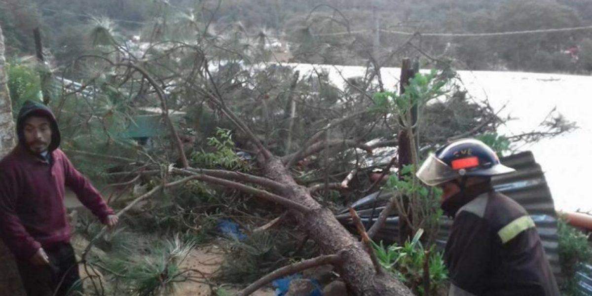 Continúa el riesgo de la caída de árboles y vallas por viento acelerado