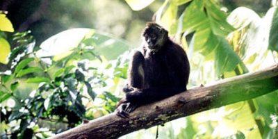 Guatemala y Belice impulsan proyecto para proteger vida silvestre