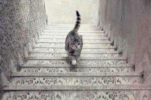 El gato que ¿sube o baja las escaleras? Foto:Vía Tumblr