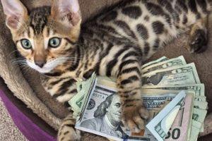 Foto:Vía Instagram/Cashcats