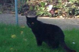 Este gato perdió un ojo en una pelea gatuna Foto:Vía Twitter: @Houseplayerz