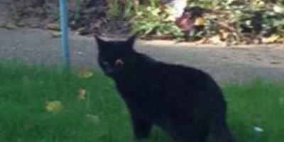 FOTOS: Gato pierde un ojo y vean con qué se lo reemplazaron